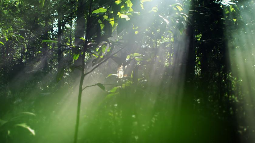 Amazonia – 3D Blu-ray Disc / DVD