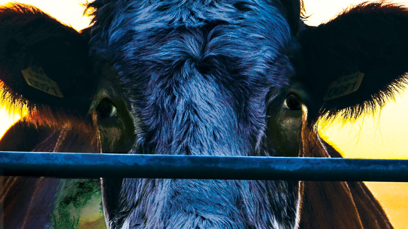 Cowspiracy – DVD